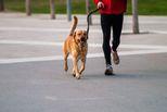 Свердловчанам напомнили правила выгула домашних животных и методы борьбы с нарушителями