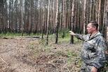 На месте лесного пожара − вырубка