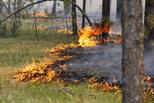Предупредить лесные пожары