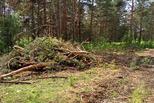 На страже бережного и уважительного отношения к городским лесам