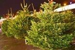 В Каменске-Уральском собирают заявки на торговлю елками