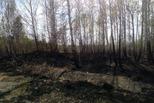 Красный петух нанес ущерб лесам