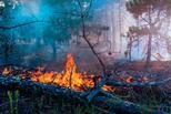 Огонь уничтожает всё живое