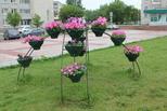 Тысячи цветов для каменцев