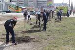В Каменске-Уральском стартовала волонтерская акция по посадке деревьев