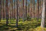 Лес под присмотром