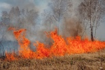 По поручению Евгения Куйвашева ведётся постоянный мониторинг лесных пожаров, удаётся оперативно локализовать возгорания